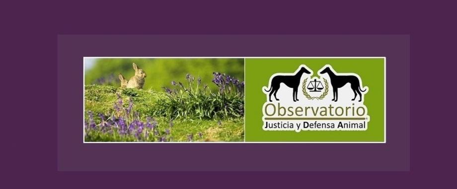 Observatorio Justicia y Defensa Animal
